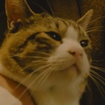 Udon is an abandoned cat that Tsuge adopted.